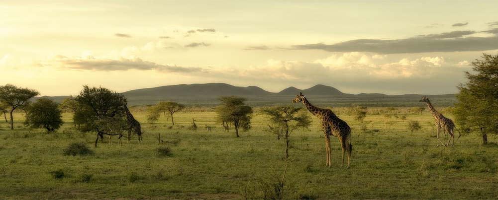 Access 2 Tanzania Safari and Tours