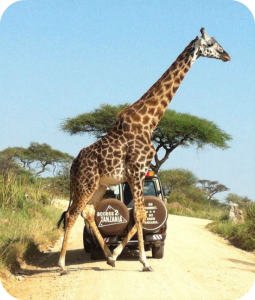 A2T Guides on safari