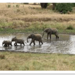 elephants river