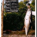 kilwafishing